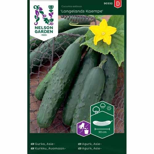Agurk, Asie-, Langelands Kaempe, grøn